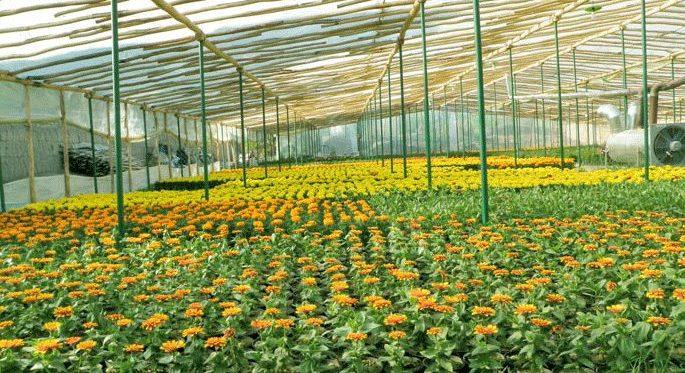 مزیت استفاده از پلی کربنات در گلخانهها