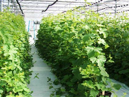 پوشش پلی اتیلن گلخانه و مزایای آن