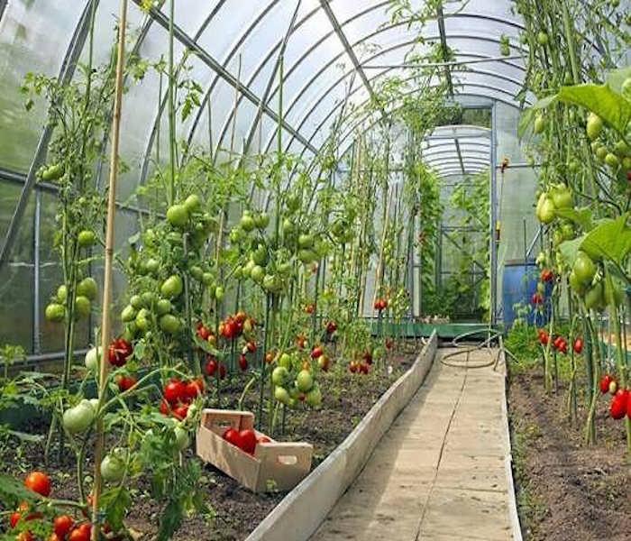 وجود نورگیر در گلخانه